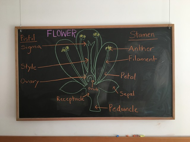 College lesson on parts of the flower